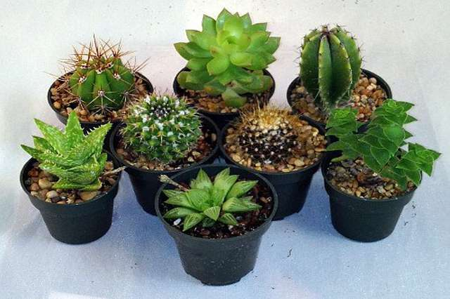home décor plants suppliers in delhi, home décor plants nursery in delhi, home decor plants in delhi