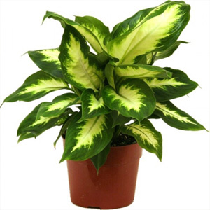 indoor plants nursery in delhi, indoor plants suppliers in delhi, indoor plants nursery in south delhi