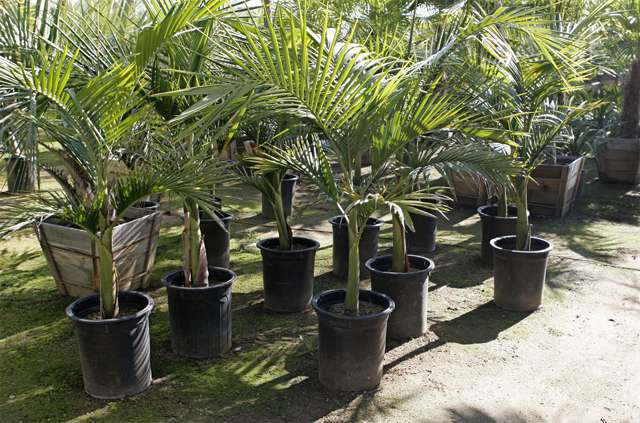 Plant nursery in delhi, plant nursery in south delhi, plant nursery in saket