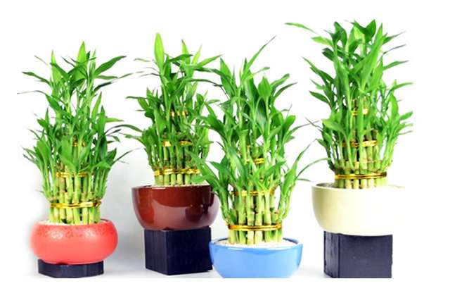 plants suppliers in delhi, gift plants nursery in delhi, gift plants in delhi